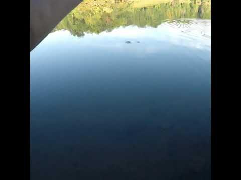 Fishing For Bass At Lake Needwood, MD