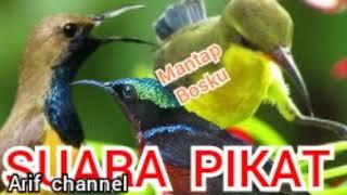 Download Mp3 Cuwit Cuwit Sogok Ontong Pikat. Arif Channel