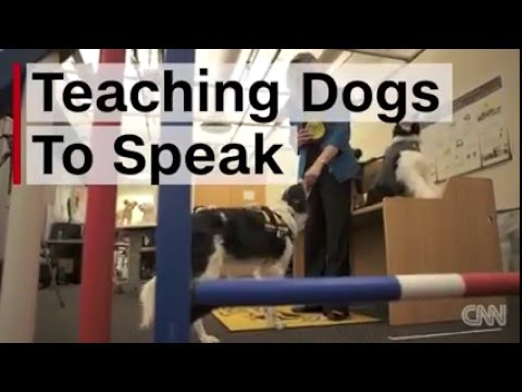 how to teach a dumb dog to speak