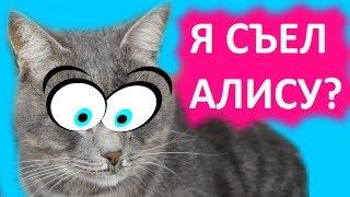 Вся правда про кота Макса. Вопрос Ответ.