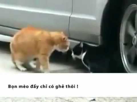 Chuyện 2 chú mèo - đã có subtitles :))