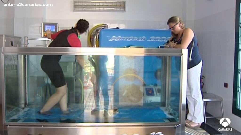 Acupuntura rehabilitaci n y piscina para perros youtube - Piscina para perros rigida ...