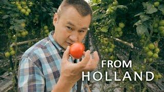 #102 Профессиональная гидропоника в Голландии. Теплица с томатами (4-я серия).(Путешествие за тёмно-желтым сыром в Гауду. Тепличное выращивание томатов на гидропонике (4-я серия). Удобрен..., 2014-12-20T10:56:36.000Z)