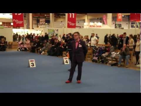 8.12.12 Helsinki Winner, BOB - ALLANA GLAMOUR GRAND CARDINAL