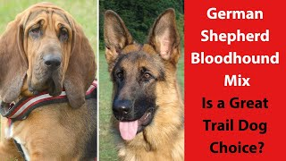 German Shepherd Bloodhound Mix: Is a Great Trail Dog Choice?