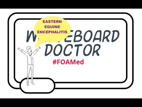 Eastern Equine Encephalitis Explained (Virus, Transmission, Diagnosis, Treatment)