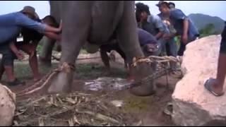 Elephant Laying Girl Baby
