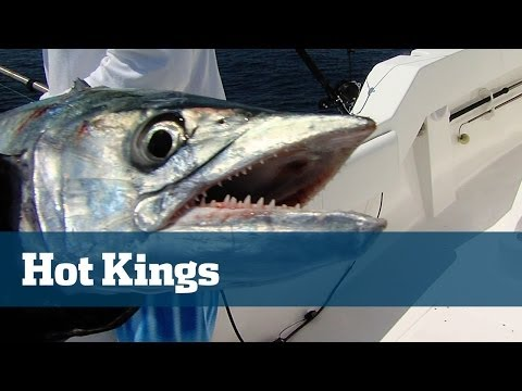 Hot King Mackerel Fishing Off South Florida On Kites And Flatlines
