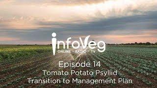 InfoVeg TV Episode 14 | Tomato Potato Psyllid - Transition to Management Plan