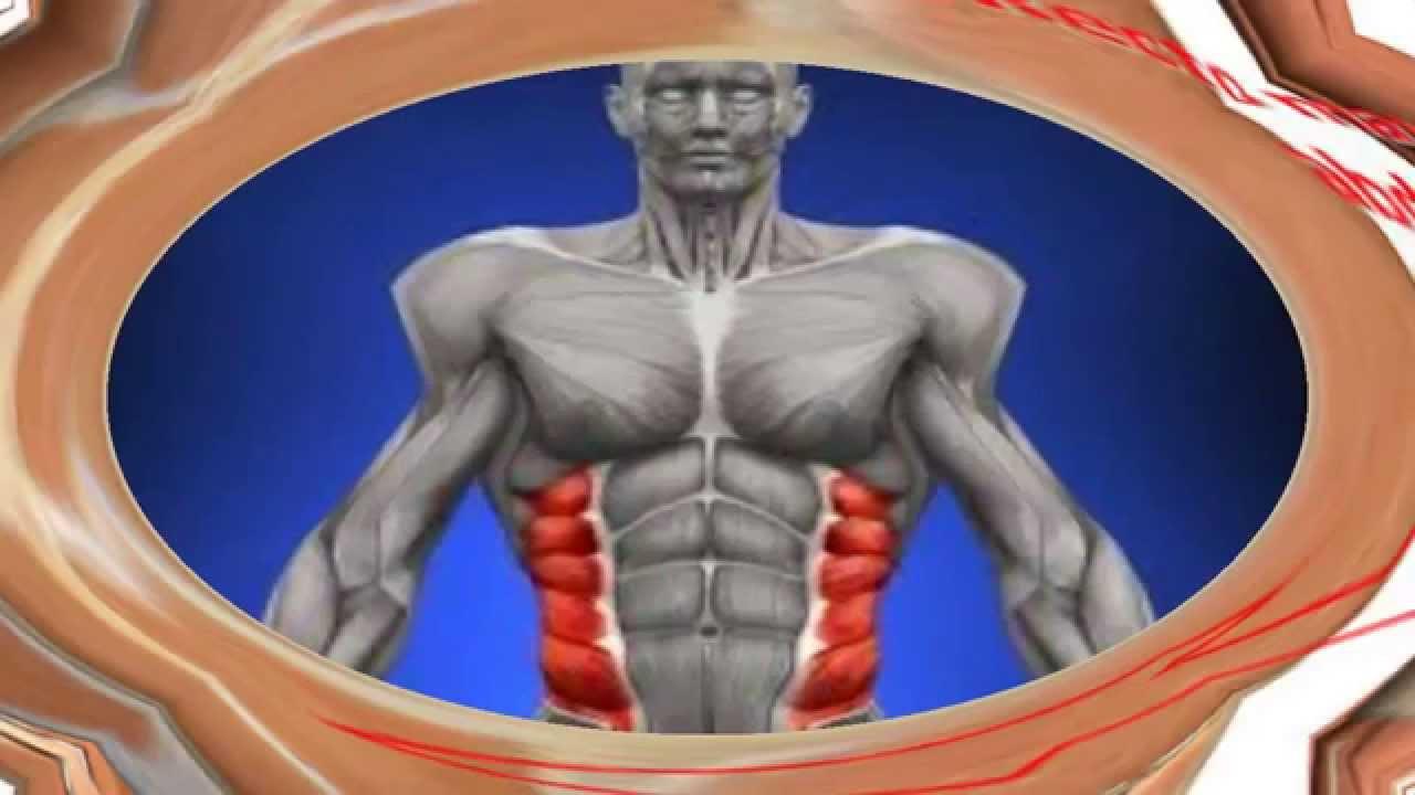 abdomen y pelvis anatomia - YouTube