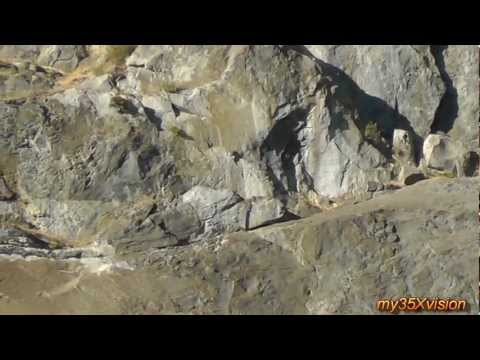 Yosemite National Park with Waterfalls and Wildlife
