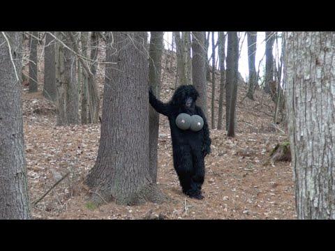 Amazing Bigfoot caught on tape!!! | HumorOutcasts