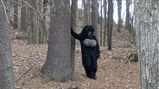 REAL NAKED FEMALE BIGFOOT CAUGHT ON TAPE