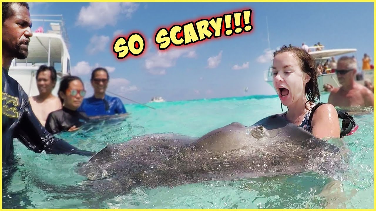 terrifying-experience-in-the-ocean-giant-stingrays-and-dolphins