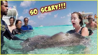 TERRIFYING EXPERIENCE IN THE OCEAN!! GIANT STINGRAYS AND DOLPHINS!!