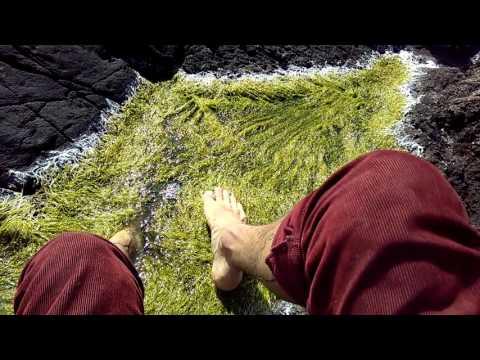 Feet deep in the moss pubic mons
