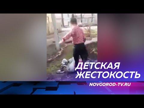 В сети был опубликован ролик с жестокой дракой новгородских подростков