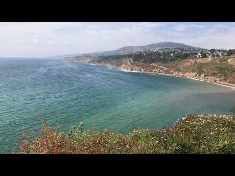 Pacific Ocean waves and breeze on coastal plants