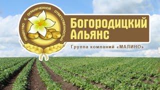 Семенной картофель от Богородицкого альянса