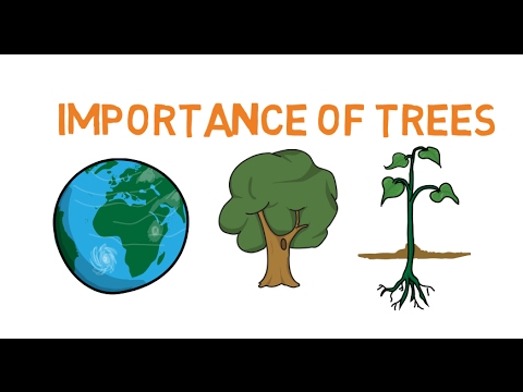 Educational video for kids - Importance of trees - Facts about trees