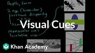 Visual cues | Processing the Environment | MCAT | Khan Academy