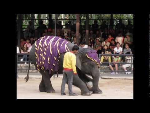 Elephant Circus in Thailand 12/2209 - Xiec Voi Thai Lan 12/2009