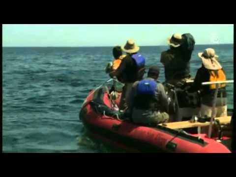 Cachalot Contre Calamar Geant documentaire complet en français