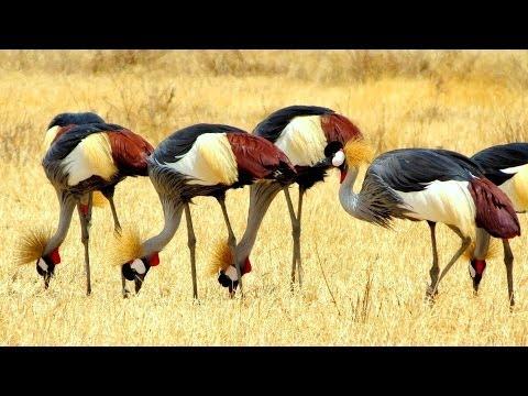 Tanzania: Ngorongoro and Lake Manyara in Tanzania