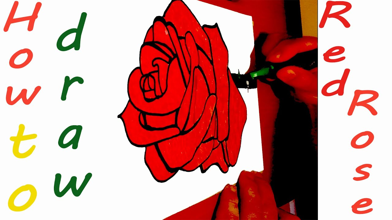 How To Draw A Rose Easy For Kids With Pencil  And Color A Realistic Red  Rose  #mrusegoodart