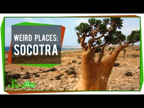 Weird Places: Socotra
