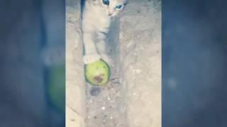 """""""Что делают кошки ночью """" Часть #1"""