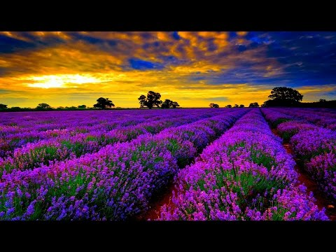"""GUIDED MEDITATION for RELAXATION - """"Lavender Flowers"""" - Calmness. Tranquility. Balance. Peace."""
