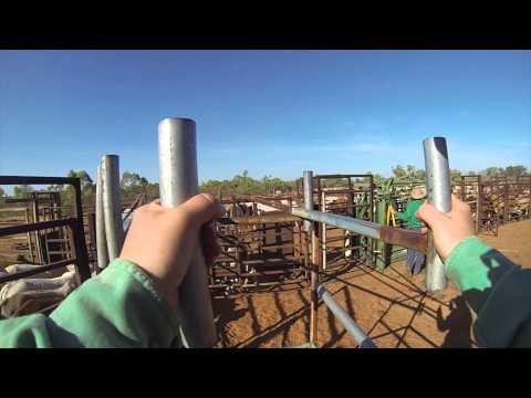 Jessievale - Cattle Station Work