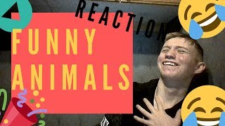 Reacting to funny animals 2019 \ funny animal videos clean 2019 \ swedish boy reacts \