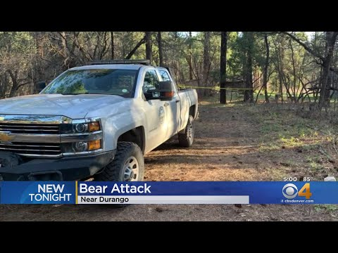 Black Bear & Cubs Euthanized After Durango Woman Found Dead From Apparent Bear Attack