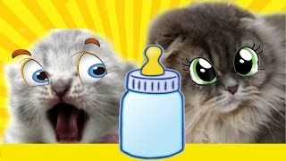 КОТ МАЛЫШ ИЩЕТ МАМУ. Сказка про котят. КАК НОВОРОЖДЕННЫЙ КОТЕНОК КОШКУ ЗВАЛ