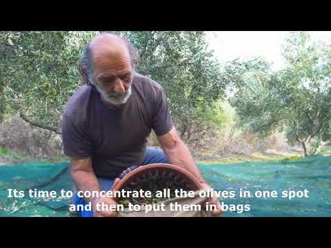Making of extra virgin Greek olive oil in Zaros Heraklion Crete Greece