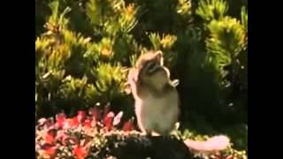 beatboxing squirrel