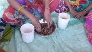 Arhar Seed treatment