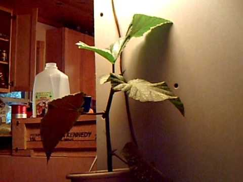 Plant Growing Nature Meditation