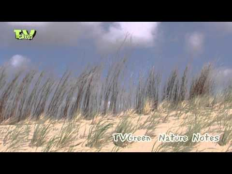 Nature Notes from the Wadden Sea #10