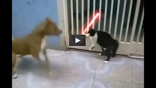 Кот Джедай ! Очень смешное видео !