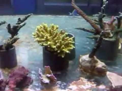 geo marine taleario