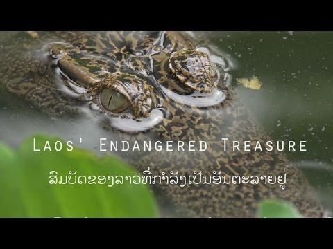 Laos' Endangered Treasure ສົມບັດຂອງລາວທີ່ຕົກຢູ່ໃນອັນຕະລາຍ