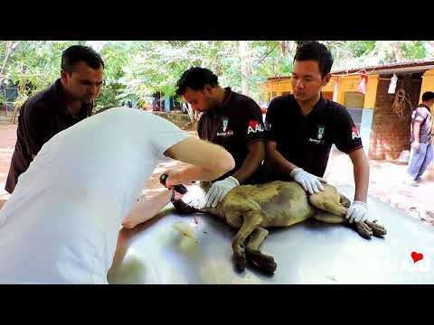 Dog choking on his own blood rescued after accident