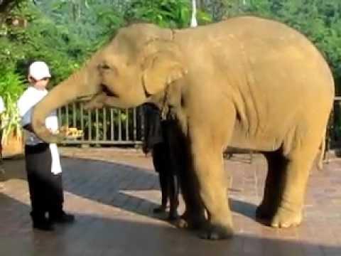 Elephant breakfast at Anantara Golden Triangle Hotel