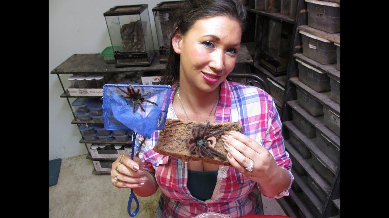 how to hold a pink toe tarantula