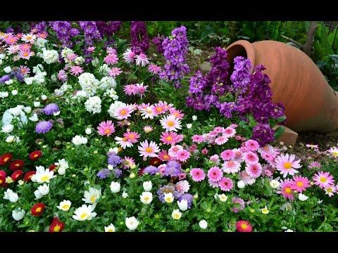 Цветочные Клумбы у Дома