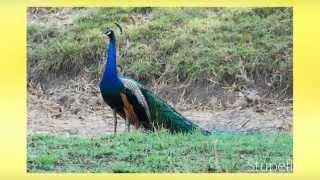 India wildlife sanctuaries