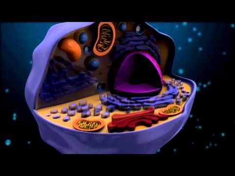 De cel en haar organellen